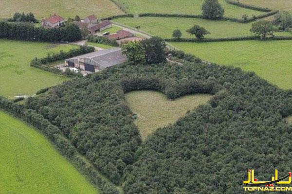 مزرعه عشق