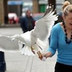 پرندگانی که از انسان دزدی می کنند!+تصاویر