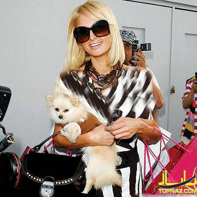 سگ پاریس هیلتون