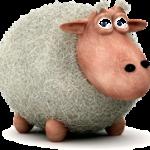 گوسفندان هم به سامانه Sms مجهز می شوند!