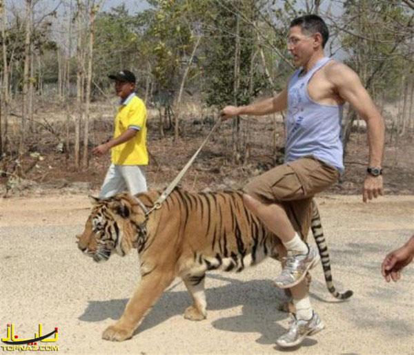 حیوانان با انسان