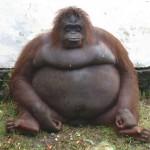 عکس های بامزه از حیوانات تپل مپل