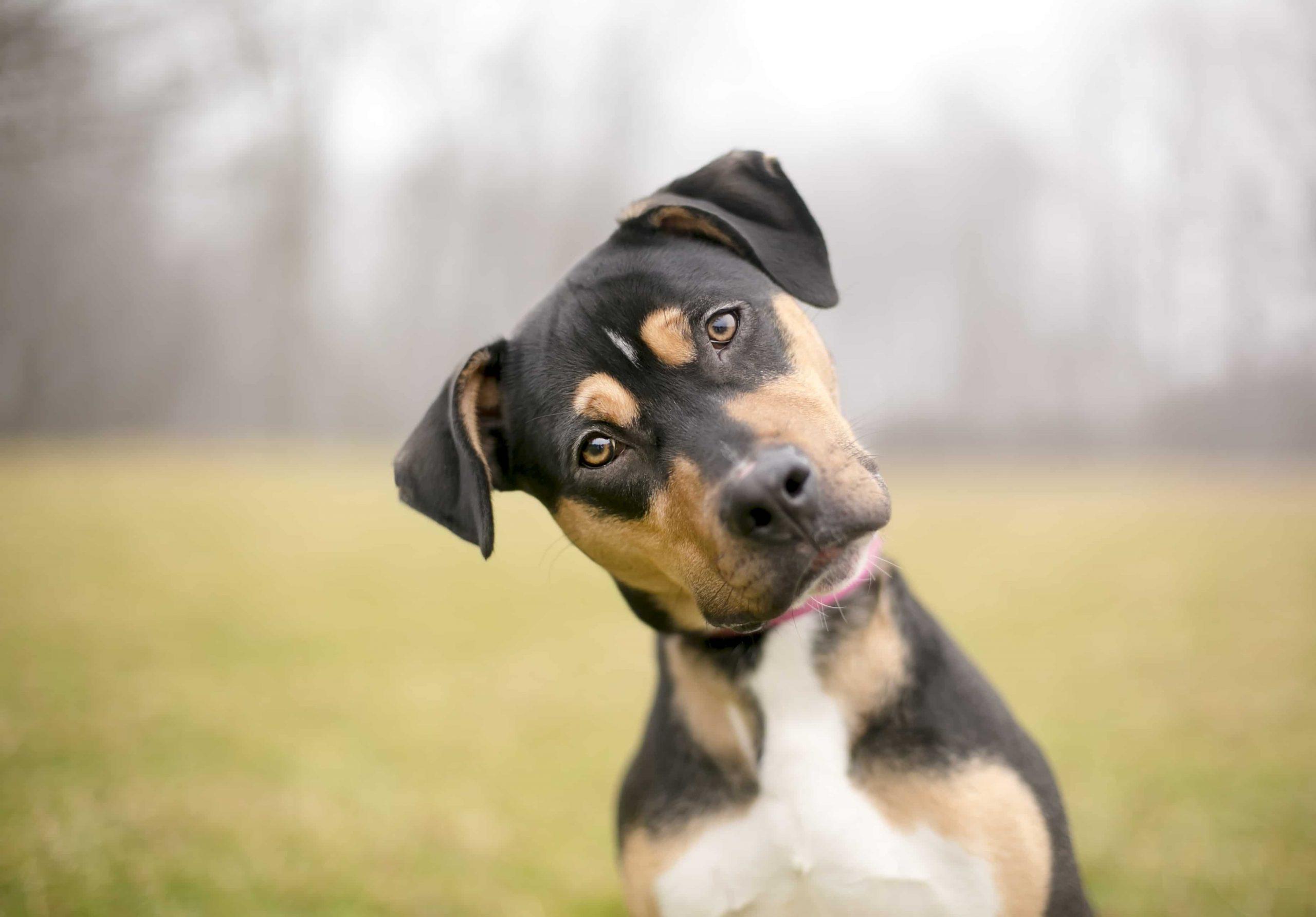 Photo of 11 حقیقت جالب در مورد سگ ها + واقعیت های خواندنی در مورد سگ