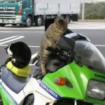 fun-cat-2