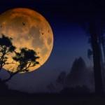 عکس های بسیار زیبا از ماه