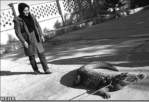 پرورش تمساح