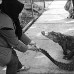 خانم ایرانی که عاشق پرورش تمساح است+تصاویر