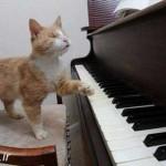 گربه نابینای هنرمند که پیانو میزند