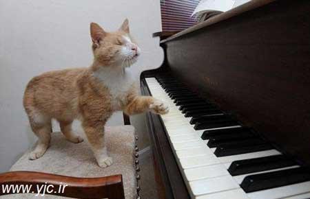 گربه ای که پیانو می نوازد