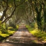 عکسهایی از زیباترین جاده جهان در ایرلند