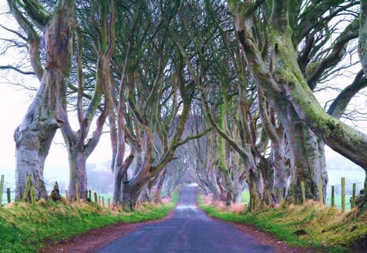جاده رمانتیک