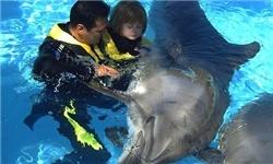 دلفین درمانی