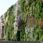 بزرگترین باغچه عمودی دنیا رکورد زد+عکس