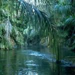 نگاهی بر 10 جنگل زیبای جهان