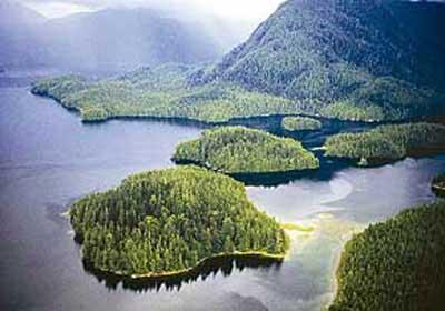 10 جنگل زیبای جهان,جنگل های ایران,جنگل های جهان