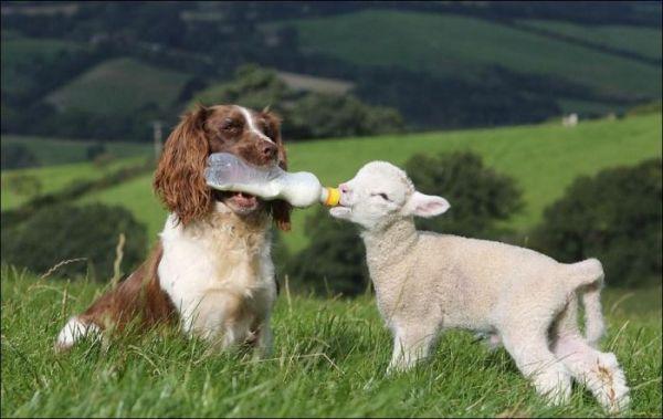 سگ و بز