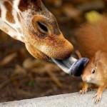 عکسهایی زیبا از عشق بین حیوانات