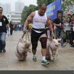 مسابقه حمل خوک در چین +عکس