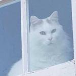 این گربه خانگی بد جنس ترین گربه دنیا شد