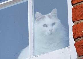 گربه بدجنس