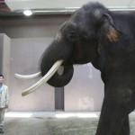 فیل سخنگو دانشمندان را حیرت زده کرد!