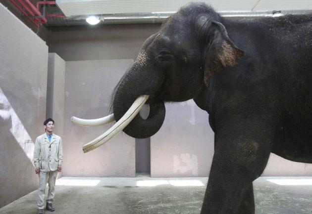 فیل سخنگو