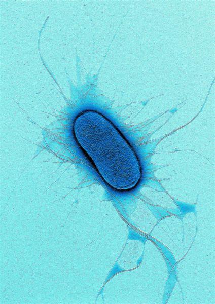 باکتری