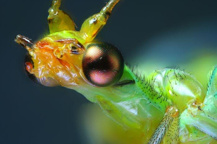 Creepy Microscope Close Ups