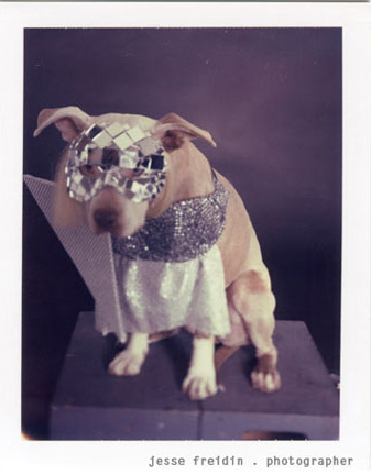 سگ لیدی گاگا