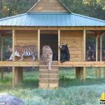 دوستی جالب و دیدنی سه حیوان وحشی مختلف +تصاویر