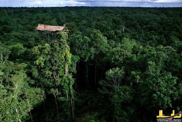 خانه جنگلی, خانه عجیب, خانه درختی