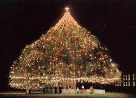 درخت های کریسمس,جالب ترین درخت های کریسمس,تزیین درخت کریسمس