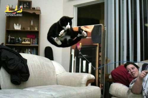 lol_cats_16