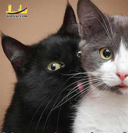 lol_cats_18
