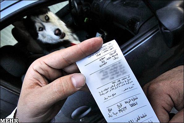جریمه سگ