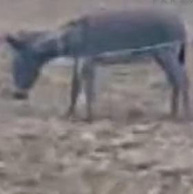 کلیپ کشتن الاغ