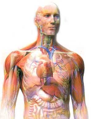 آناتومی بدن انسان