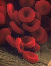 اطلاعاتی در مورد انواع گروه خونی