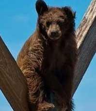 این خرس اینجا چه کار میکنه؟؟!+عکس