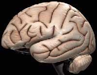 تفاوت مغز زنان با مردان را بدانید!