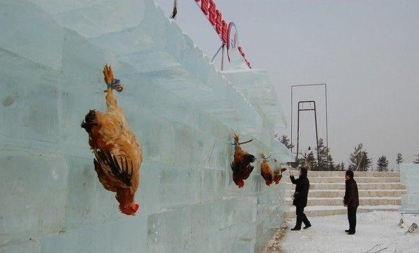 فستیوال یخ چین