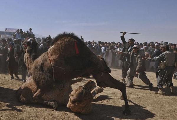 تفریح افغانستان