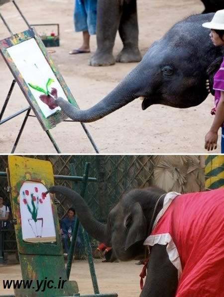 حیوانات هنرمند