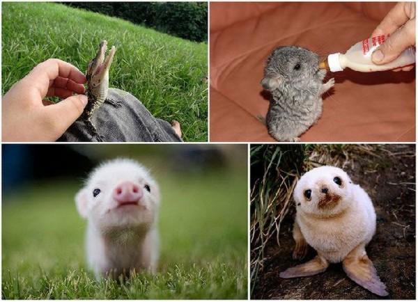 نوزاد حیوانات
