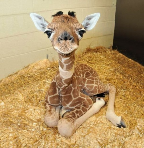 Baby animals03 Baby Animals (27 pics)