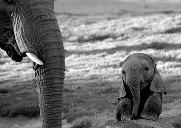 Baby animals04 Baby Animals (27 pics)