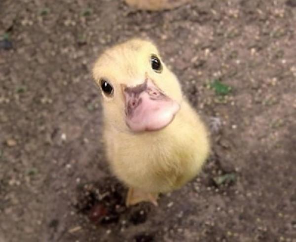 Baby animals06 Baby Animals (27 pics)