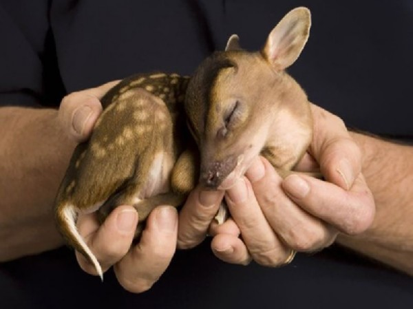 Baby animals07 Baby Animals (27 pics)