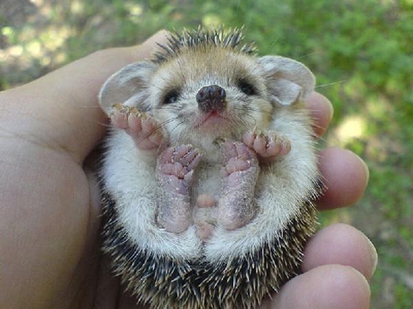Baby animals09 Baby Animals (27 pics)
