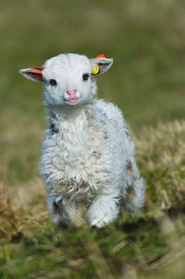 Baby animals15 Baby Animals (27 pics)